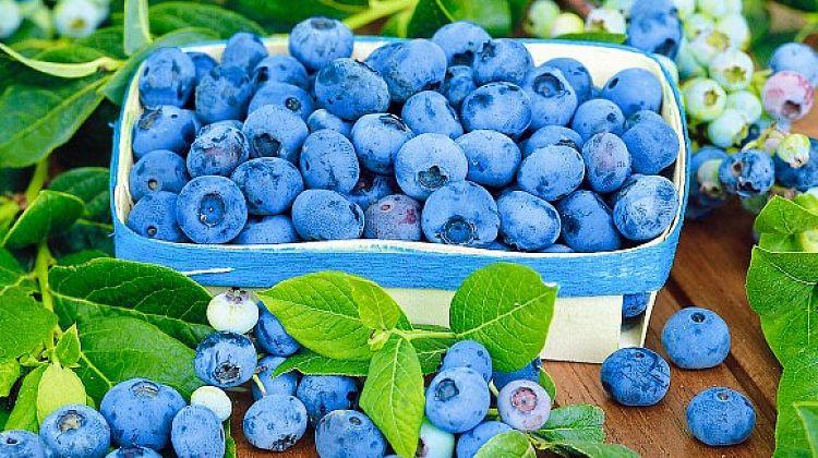 """5 июля пройдет семинар """"Товарное производство ягод голубики канадской и клюквы крупноплодной"""""""