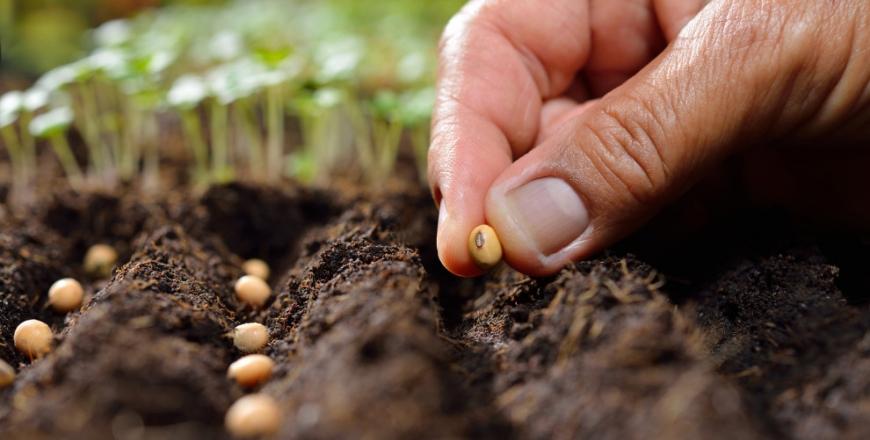 Анонс форуму виробників та продавців садивного матеріалу