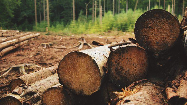 Аукціони по лісу на sale.ueex.com.ua – майданчику Прозорро.Продажі