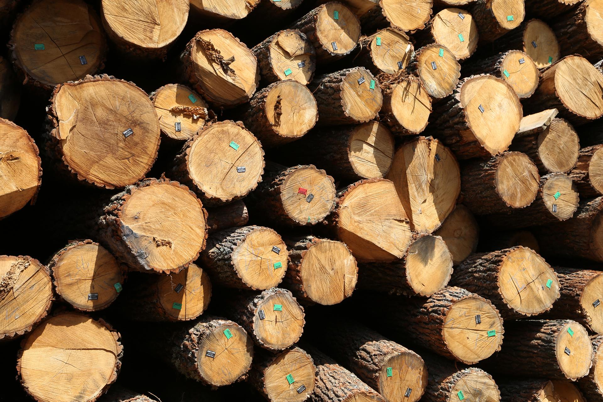 Сучасні торги деревиною